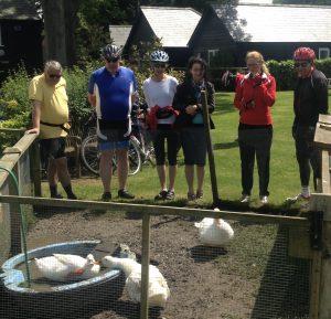 Essex ducks
